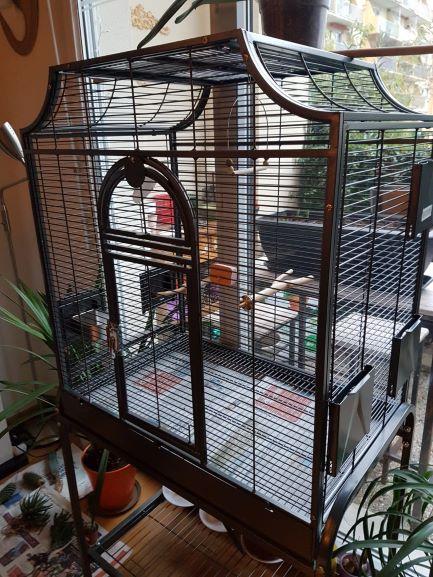 Préparation pour accueillir des perruches ondulées Img-2011