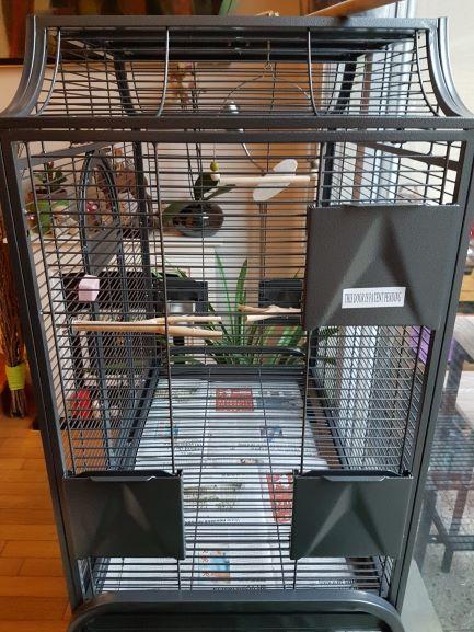 Préparation pour accueillir des perruches ondulées Img-2012