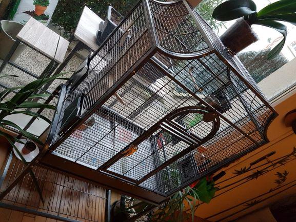 Préparation pour accueillir des perruches ondulées Img-2013