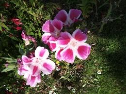 Quelle est cette fleur? Img_2010