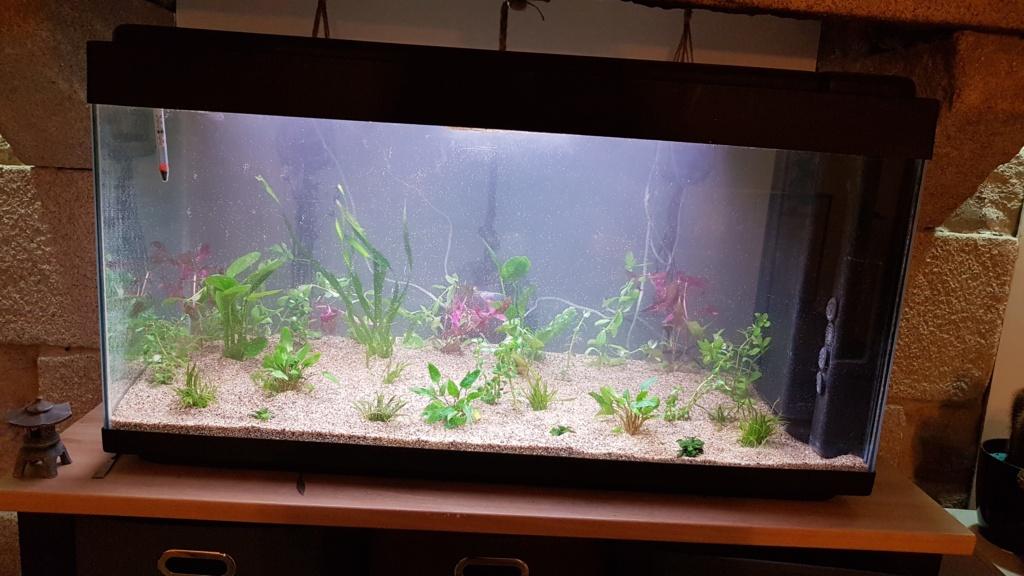 Bac asiatique 200L , meuble, algues et choix des futurs occupants.  20200813