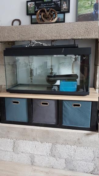 Bac asiatique 200L , meuble, algues et choix des futurs occupants.  20200814