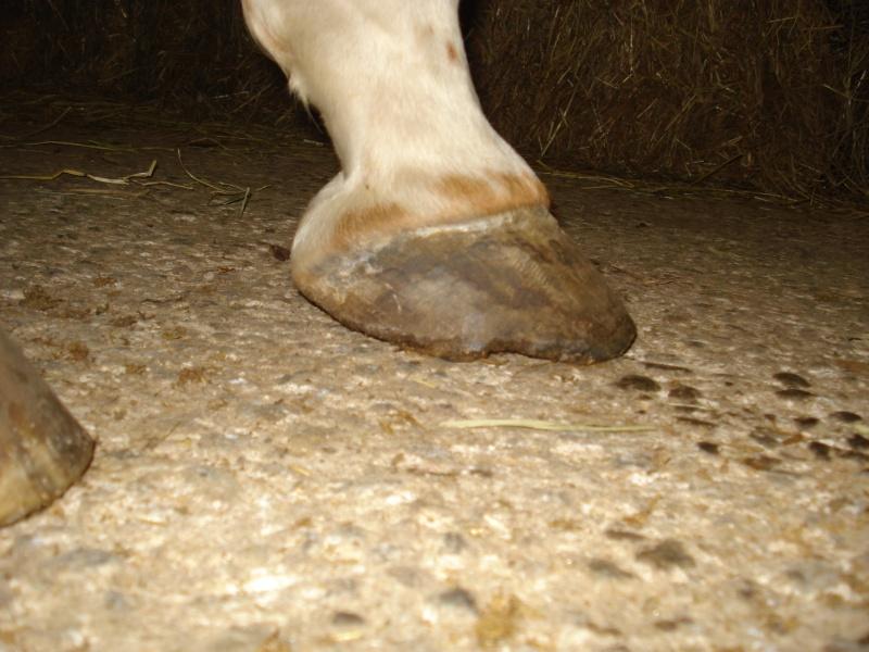 Vos expérimentations pieds nus - Page 3 Dsc03812