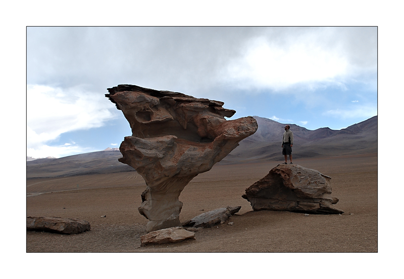 Sculptures naturelles ou œuvres de la nature Arbre-10