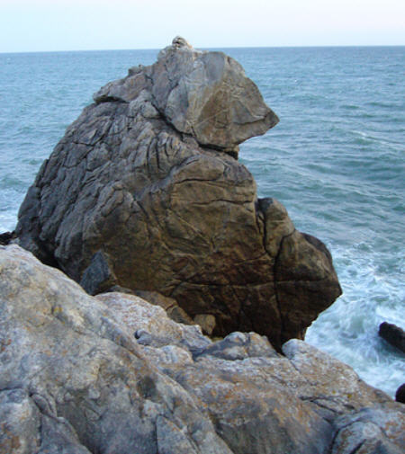 Sculptures naturelles ou œuvres de la nature Ours_c10