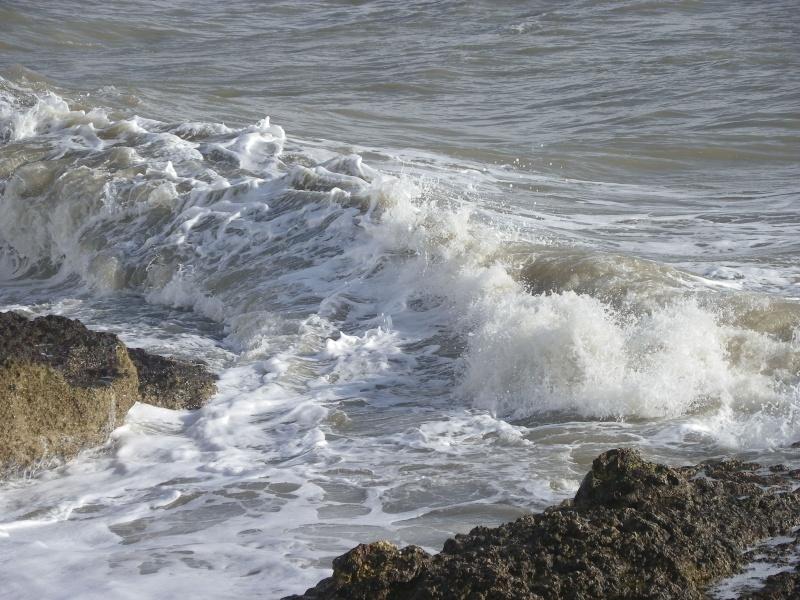 La côte et ses plages entre Royan et Nauzan par le GR4 Imgp5239