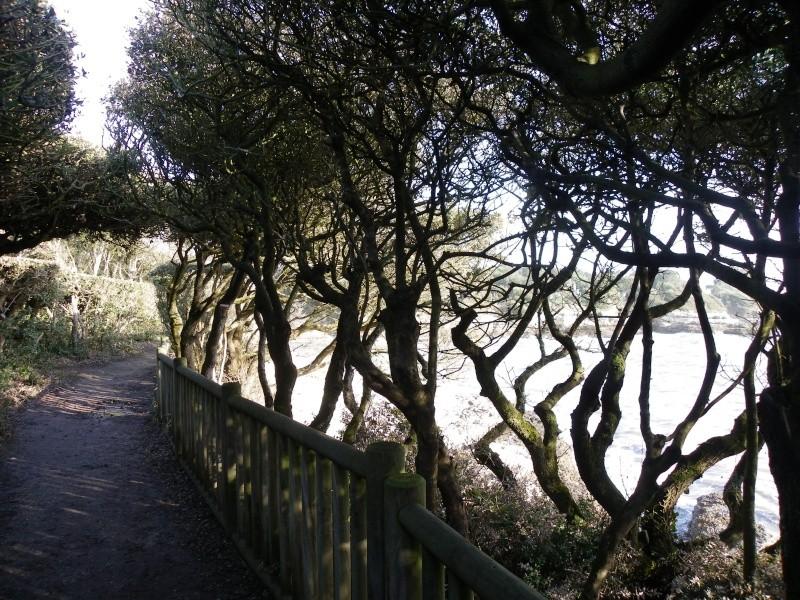 La côte et ses plages entre Royan et Nauzan par le GR4 Imgp5319