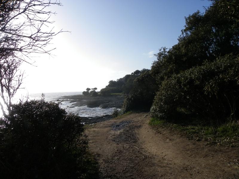 La côte et ses plages entre Royan et Nauzan par le GR4 Imgp5320