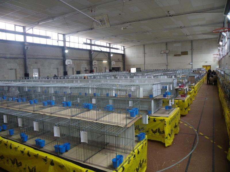 Exposition nationale d'aviculture : Rochefort le 26 et 27 février 2011 Imgp5410