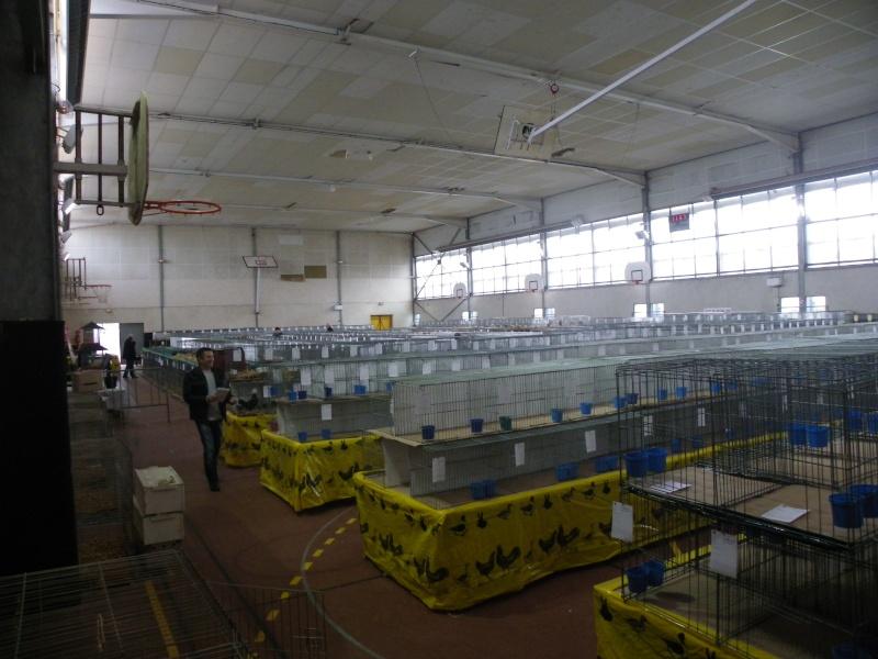 Exposition nationale d'aviculture : Rochefort le 26 et 27 février 2011 Imgp5411