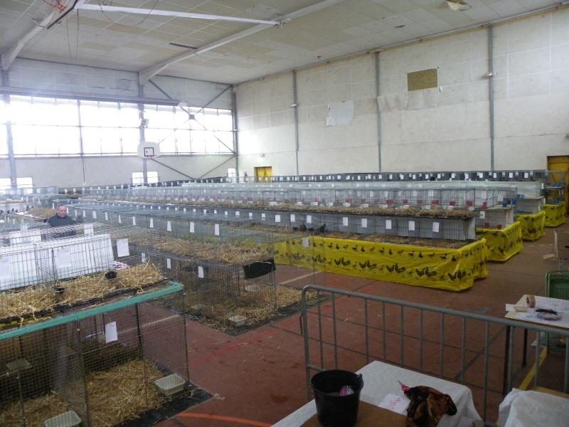 Exposition nationale d'aviculture : Rochefort le 26 et 27 février 2011 Imgp5412