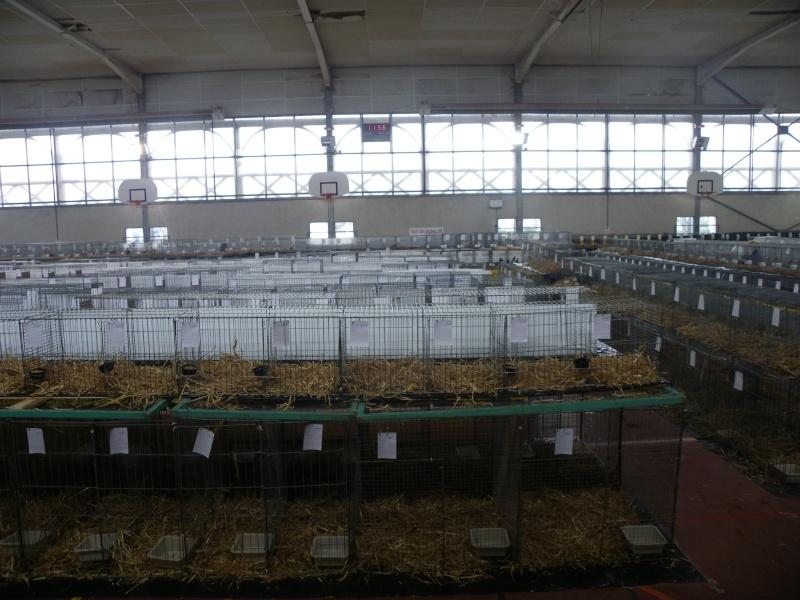 Exposition nationale d'aviculture : Rochefort le 26 et 27 février 2011 Imgp5413