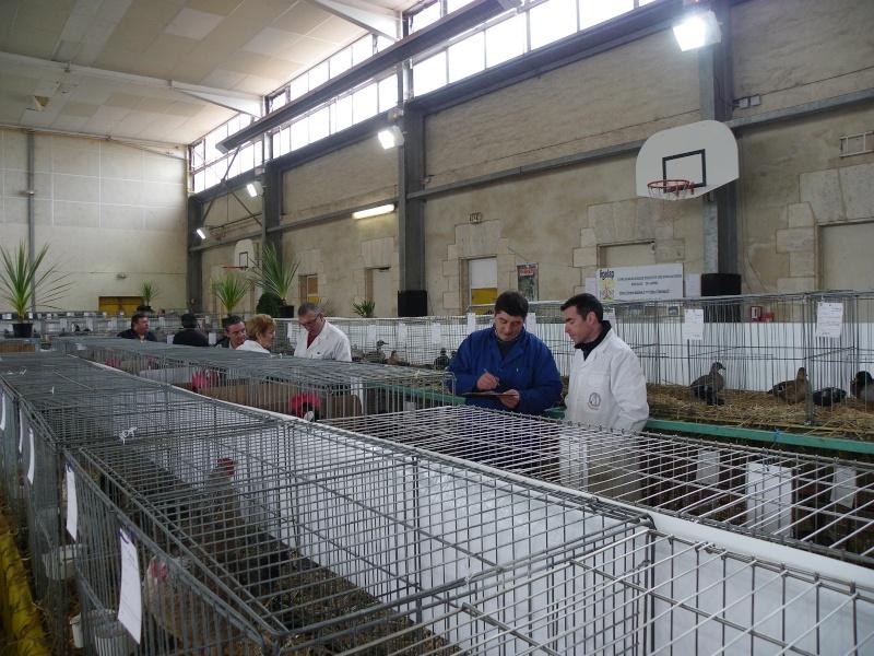 Exposition nationale d'aviculture : Rochefort le 26 et 27 février 2011 Imgp5610