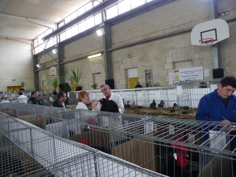 Exposition nationale d'aviculture : Rochefort le 26 et 27 février 2011 Imgp5611