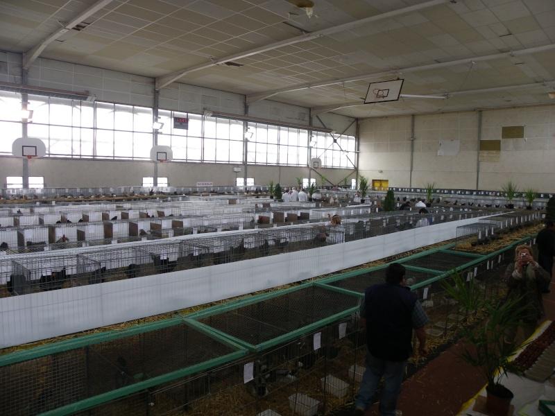 Exposition nationale d'aviculture : Rochefort le 26 et 27 février 2011 Imgp5612
