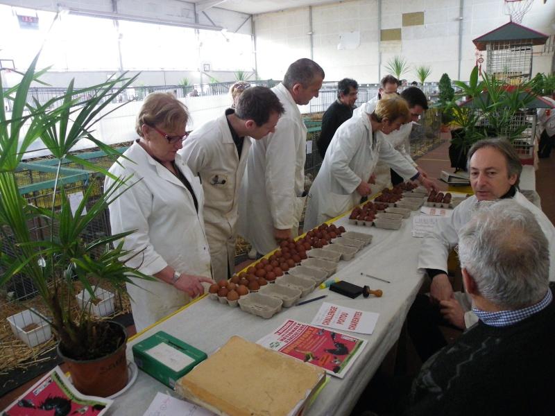 Exposition nationale d'aviculture : Rochefort le 26 et 27 février 2011 Imgp5614