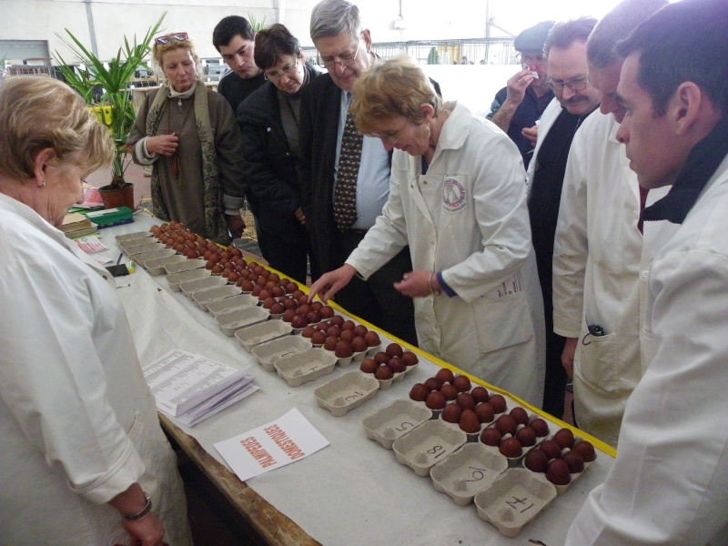 Exposition nationale d'aviculture : Rochefort le 26 et 27 février 2011 Imgp5615