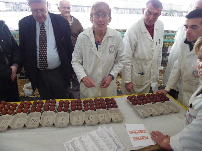 Exposition nationale d'aviculture : Rochefort le 26 et 27 février 2011 Imgp5616
