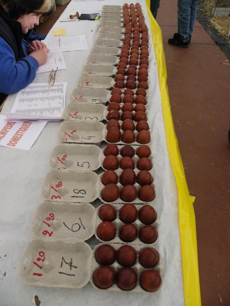 Exposition nationale d'aviculture : Rochefort le 26 et 27 février 2011 Imgp5618