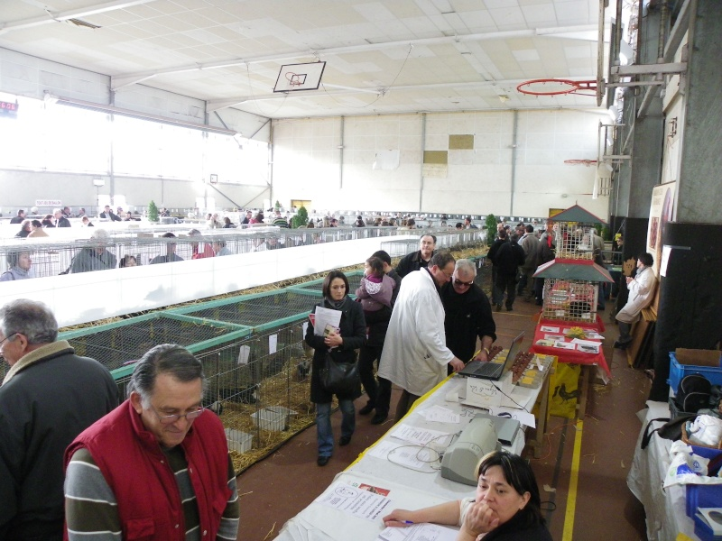 Exposition nationale d'aviculture : Rochefort le 26 et 27 février 2011 Imgp6012