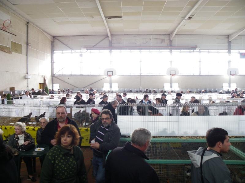 Exposition nationale d'aviculture : Rochefort le 26 et 27 février 2011 Imgp6014