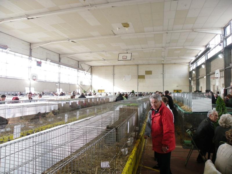 Exposition nationale d'aviculture : Rochefort le 26 et 27 février 2011 Imgp6110