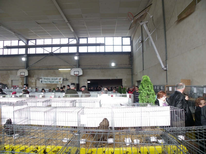 Exposition nationale d'aviculture : Rochefort le 26 et 27 février 2011 Imgp6111