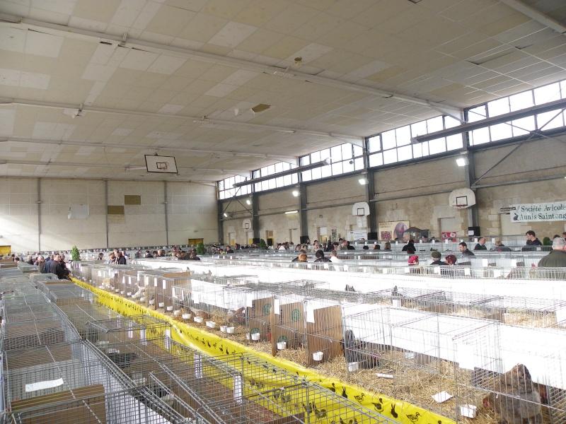 Exposition nationale d'aviculture : Rochefort le 26 et 27 février 2011 Imgp6112