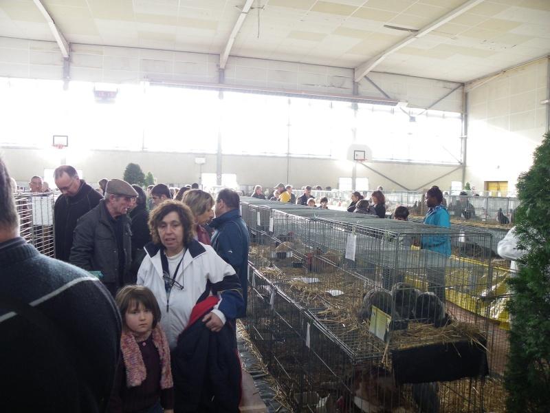 Exposition nationale d'aviculture : Rochefort le 26 et 27 février 2011 Imgp6113