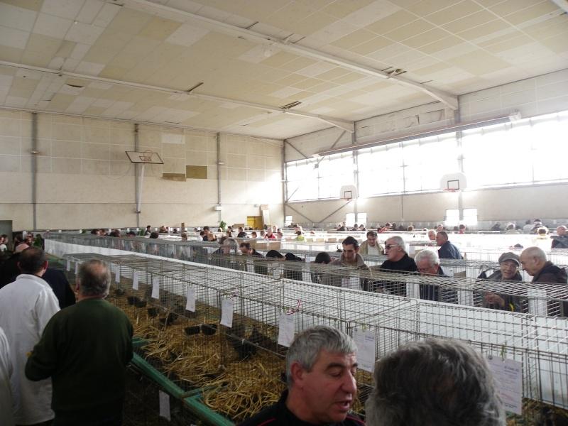 Exposition nationale d'aviculture : Rochefort le 26 et 27 février 2011 Imgp6114