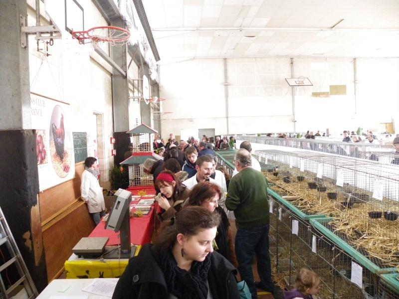 Exposition nationale d'aviculture : Rochefort le 26 et 27 février 2011 Imgp6115