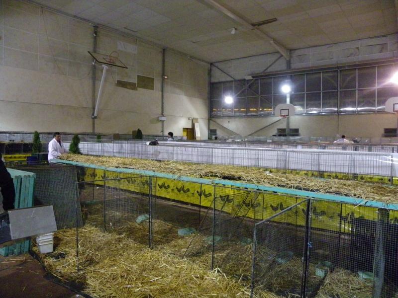 Exposition nationale d'aviculture : Rochefort le 26 et 27 février 2011 Imgp6210