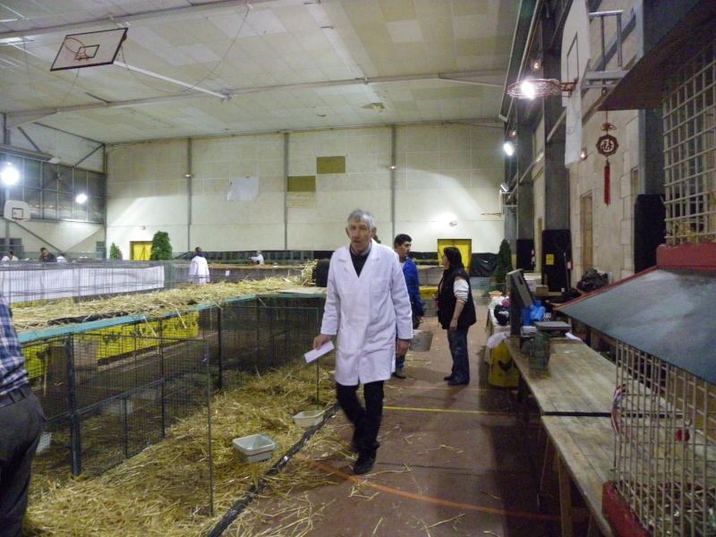 Exposition nationale d'aviculture : Rochefort le 26 et 27 février 2011 Imgp6211