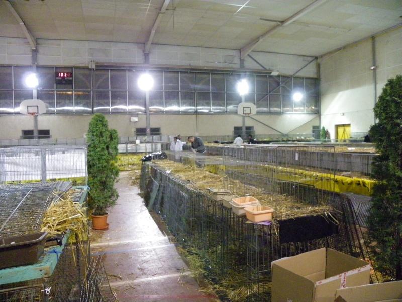 Exposition nationale d'aviculture : Rochefort le 26 et 27 février 2011 Imgp6212