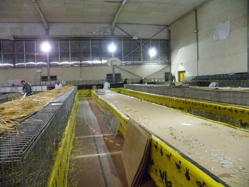 Exposition nationale d'aviculture : Rochefort le 26 et 27 février 2011 Imgp6213