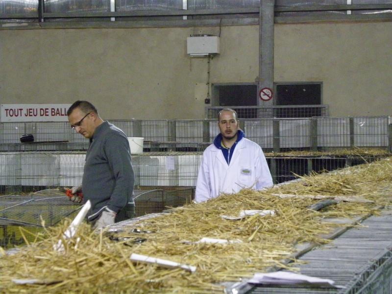 Exposition nationale d'aviculture : Rochefort le 26 et 27 février 2011 Imgp6214