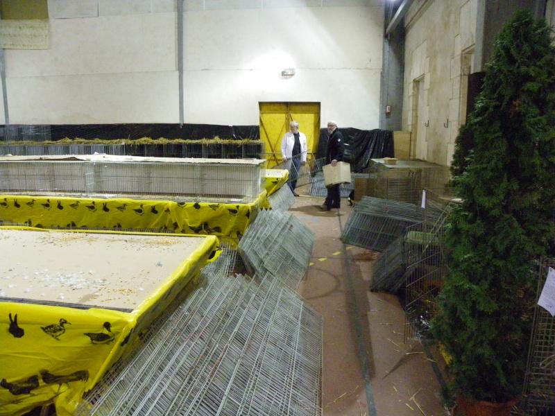Exposition nationale d'aviculture : Rochefort le 26 et 27 février 2011 Imgp6215
