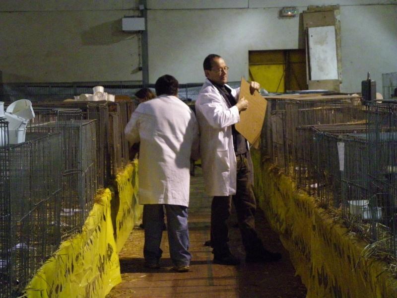 Exposition nationale d'aviculture : Rochefort le 26 et 27 février 2011 Imgp6217