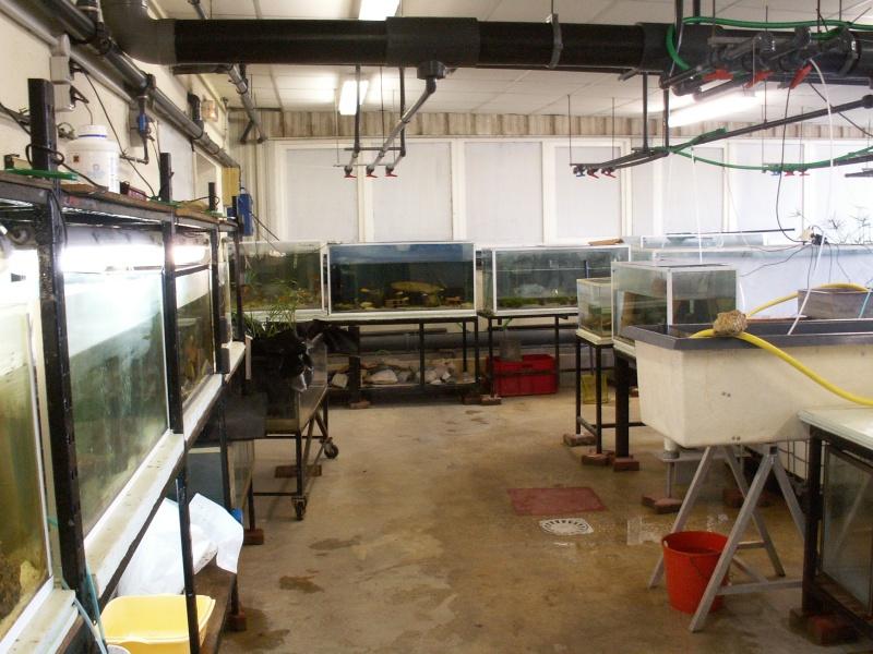 Bourse aquariophile : 14 et 15 février 2009 Bourcefranc Pict0055