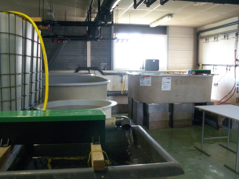 Bourse aquariophile : 14 et 15 février 2009 Bourcefranc Pict0059