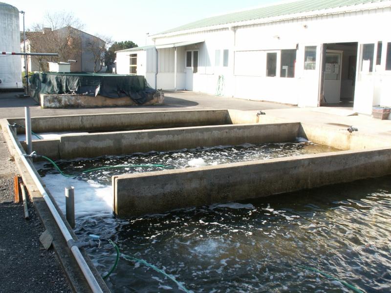 Bourse aquariophile : 14 et 15 février 2009 Bourcefranc Pict0062