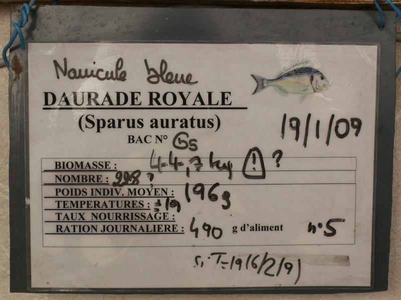 Bourse aquariophile : 14 et 15 février 2009 Bourcefranc Pict0067