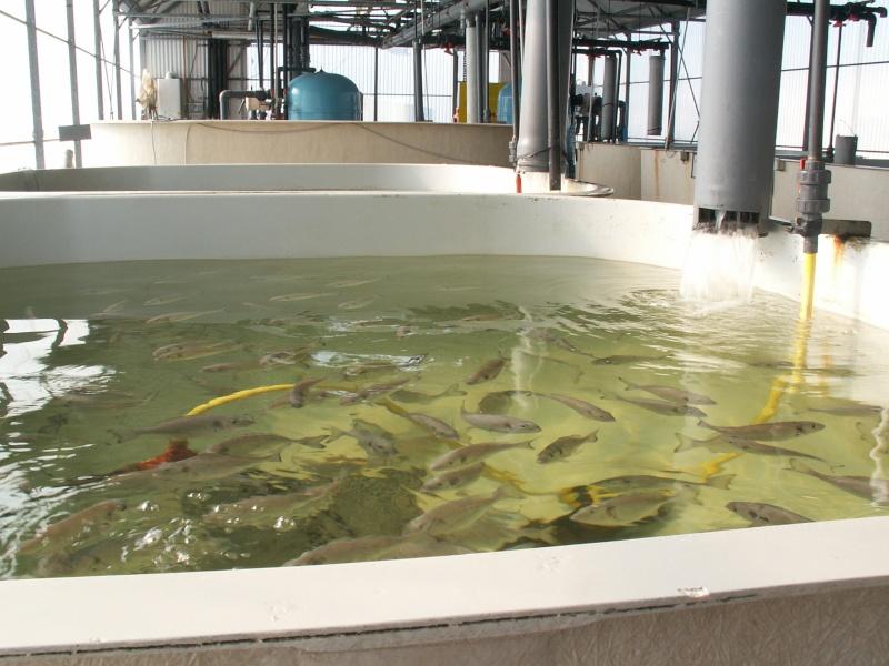 Bourse aquariophile : 14 et 15 février 2009 Bourcefranc Pict0068