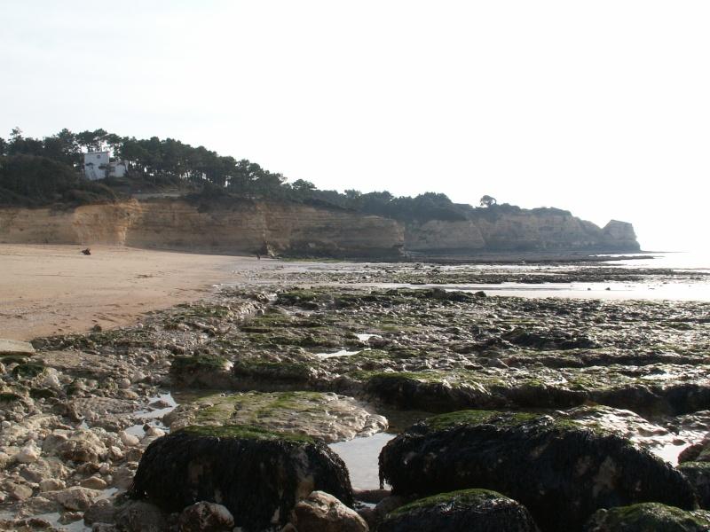 La Pointe de Suzac (entre St George de Didonne et Meschers ) Pict0077