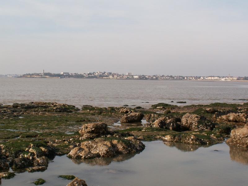 La Pointe de Suzac (entre St George de Didonne et Meschers ) Pict0078