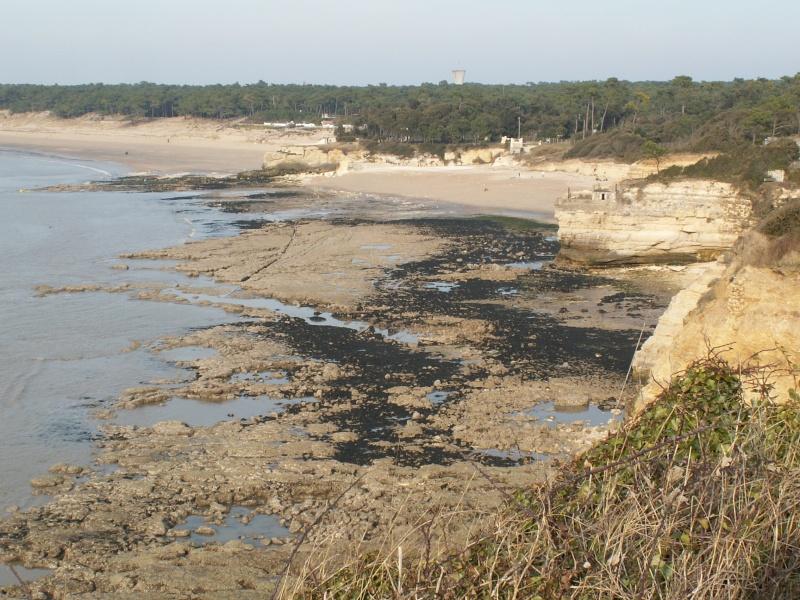 La Pointe de Suzac (entre St George de Didonne et Meschers ) Pict0164