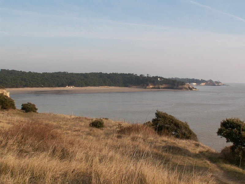 La Pointe de Suzac (entre St George de Didonne et Meschers ) Pict0169
