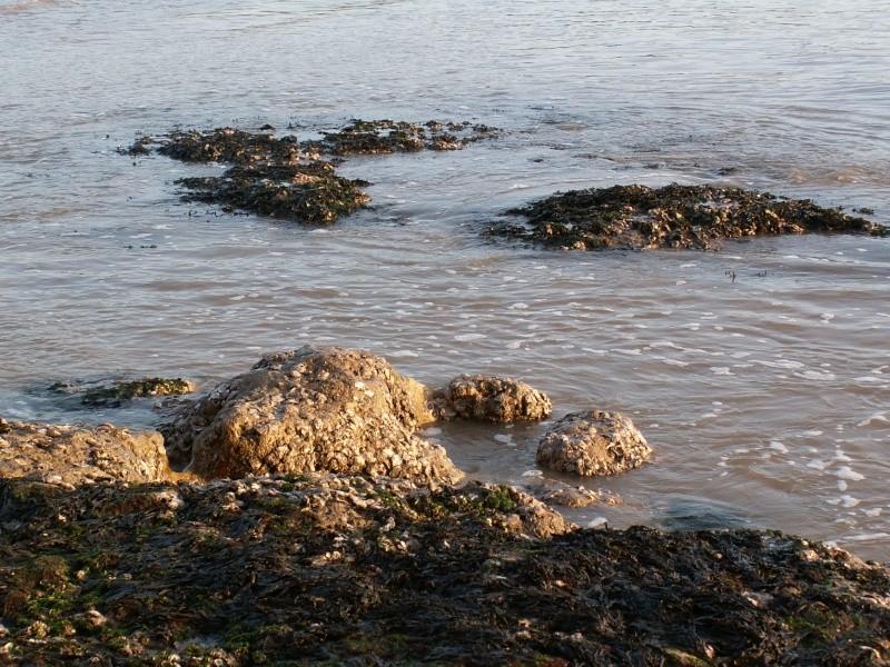 La Pointe de Suzac (entre St George de Didonne et Meschers ) Pict0224