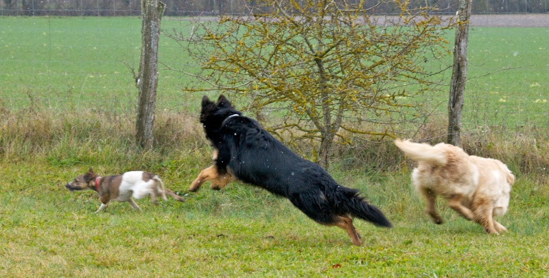 chiens et essai du 50-200 Dog_110