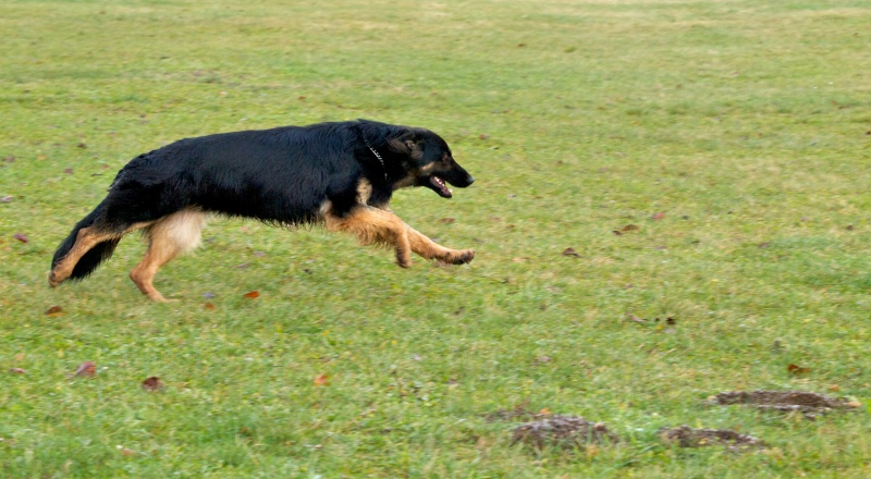 chiens et essai du 50-200 Dog_310